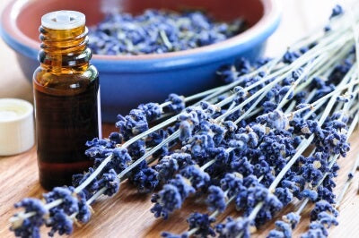 Lavender essential oil for relaxation
