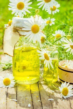 Essential oils for sleep and relaxation - Roman Chamomile