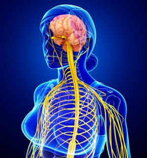 Magnesium and nervous system relation