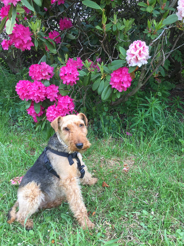 Taking time to smell the roses..... ok we know their Rhododendrons!