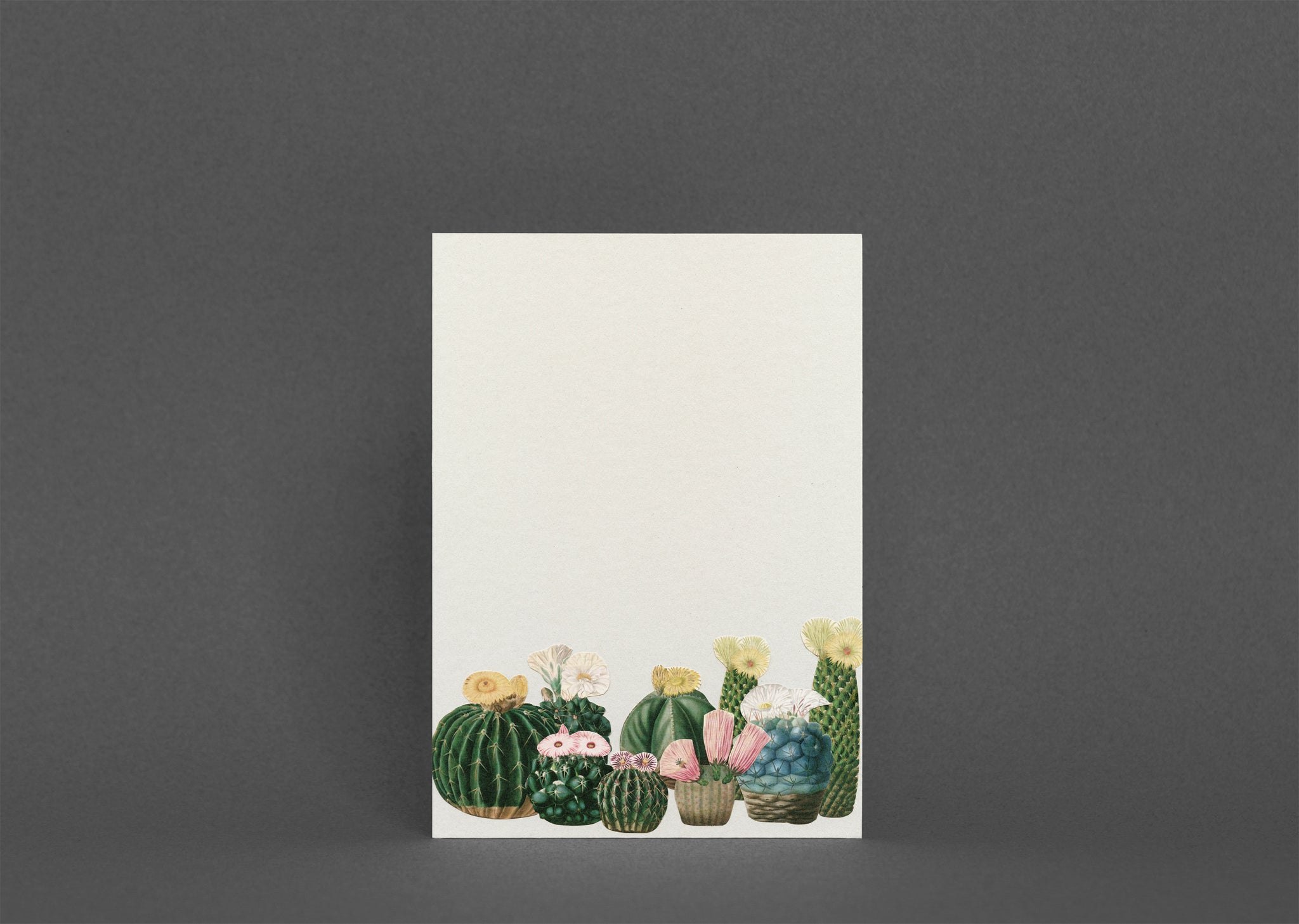 Blank Greetings Card With Envelope - Cactus Garden