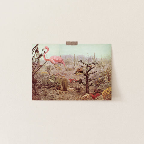 Blank Greetings Card - Wild Flamingo