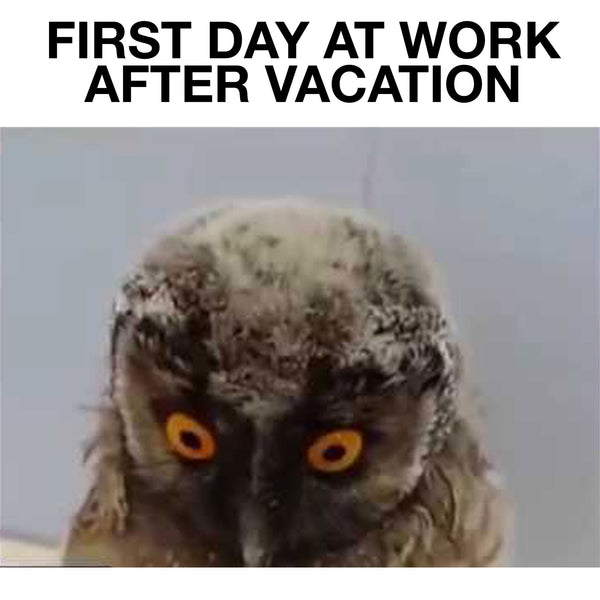 First Day At Work After Vacation - Funny Owl Movie