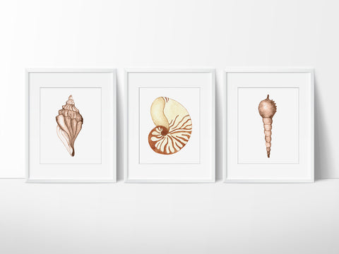 Seashell Printable Wall Art Set - Printable Haven