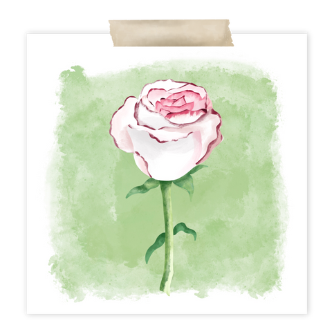 Pink + White Rose Procreate