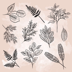 10 Leaves + Branches Procreate Stamps