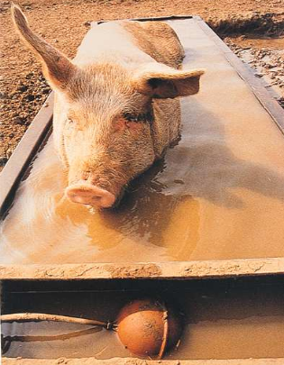Backflow Prevention Devices - Pig in Water Trough