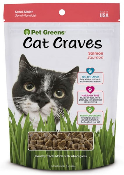 Cat Craves Treats