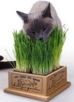 Kitty's Garden Cat Grass & Refills
