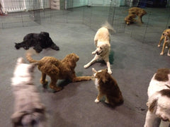 Dancin Woofs Compassionate Dog Training and Dog Daycare in Bend, Oregon