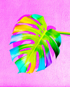 Party Monstera