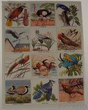 Golden Stamp Book Birds Of The World White 6th Printing 1976 Stickers Vintage - FUNsational Finds - 2
