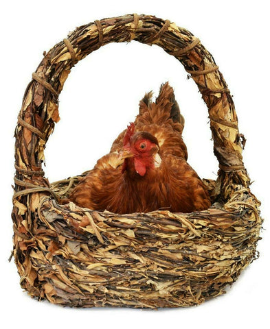 UNIQUE AND DECORATIVE BROODING HEN RESTING IN BASKET TAXIDERMY MOUNT!! - Old Europe Antique Home Furnishings