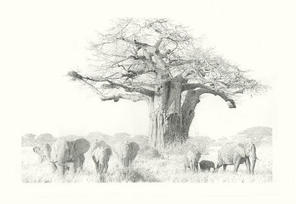 """Elephants And Baobab"""