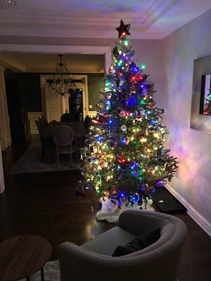 Decorated multi-color Fraser Fir City Tree Delivery