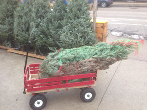 Little wagon Christmas tree delivery