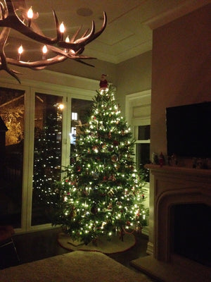 Fraser Fir with Soft White Lights