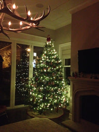 Oversized (10ft+) Fraser Fir Christmas Tree
