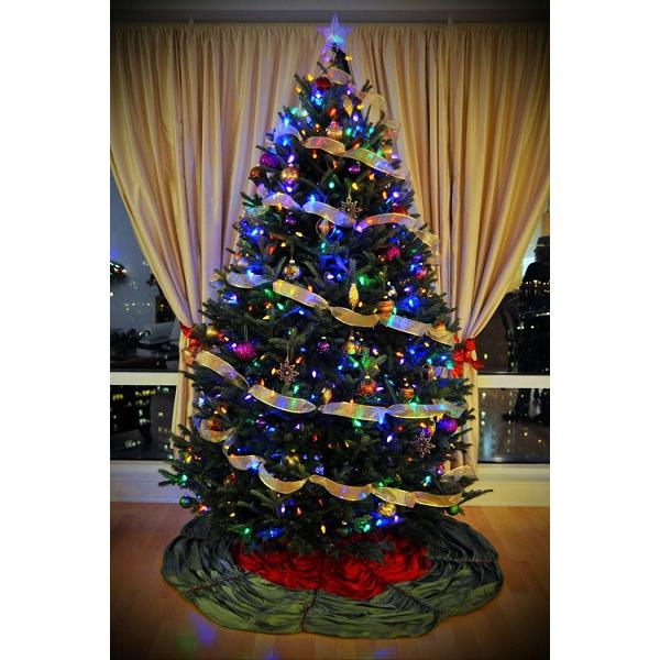 Fraser Fir Trees - Big Star Lot: Employee Discount