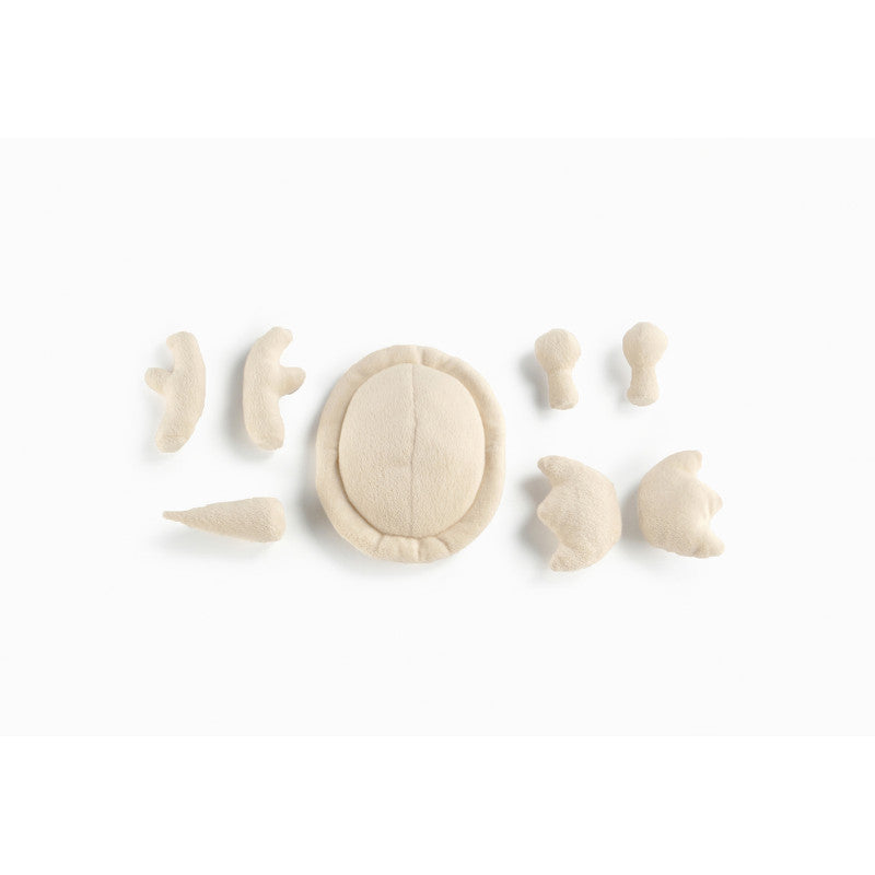 Shell Set White