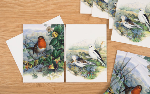Christmas Cards - The birds of Great Britain|Cardiau Nadolig - 'The birds of Great Britain'