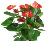 Great Impressions Double Veiners - Anthurium Petal Small