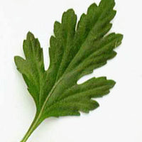 Great Impressions Double Veiners - Chrysanthemum Leaf - Small