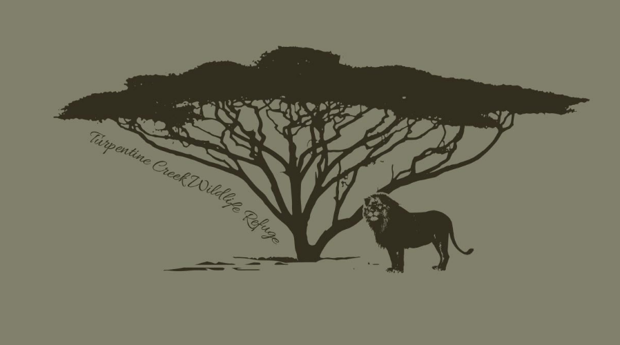 Lion Under an Acacia Tree Ladies Recycled Fabric T-shirt