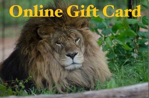 """Online Only"" Gift Card"