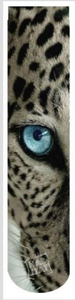 Leopard Eye Sublimated Socks