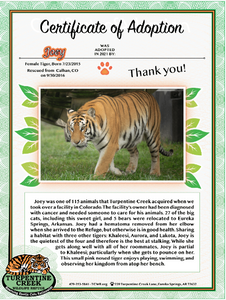 Joey Tiger Adoption
