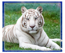 Load image into Gallery viewer, Aurora the Tiger Throw