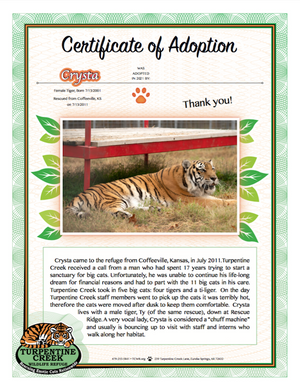 Crysta Tiger Adoption
