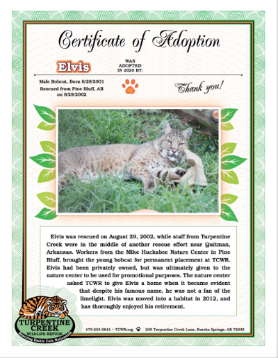 Elvis Bobcat Adoption