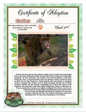 Goober Monkey Adoption