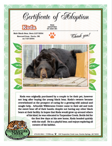 Koda (boy) Bear Adoption