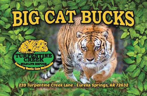 $10 Big Cat Bucks Card