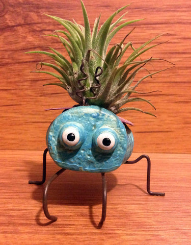 Tilla Critters Evel KaBeetle One of a Kind Air Plant Creations from Chili Fiesta HandiWorks