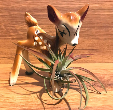 Tilla Critters Fawn & Flora One of a Kind Airplant Creations by Chili Fiesta Handiworks