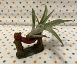 Tilla Critters Hammock Hanging One of a Kind Airplant Creations by Chili Fiesta Handiworks