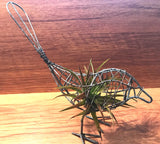 Tilla Critters Indigestion One of a Kind Airplant Creations by Chili Fiesta Handiworks