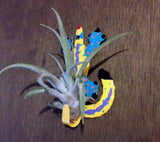 Tilla Critters Karma Chameleon One of a Kind Air Plant Creations from Chili Fiesta HandiWorks