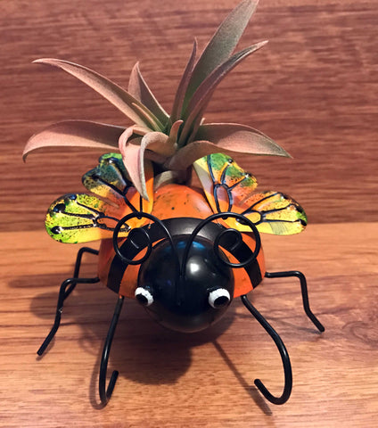 Tilla Critters Lady A One of a Kind Airplant Creations by Chili Fiesta Handiworks