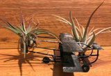 Tilla Critters Orville & Wilbur One of a Kind Airplant Creations by Chili Fiesta Handiworks