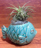 Tilla Critters Rasta Fish Mon One of a Kind Air Plant Creations from Chili Fiesta HandiWorks