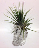 Tilla Critters Rocking Robin One of a Kind Air Plant Creations from Chili Fiesta HandiWorks