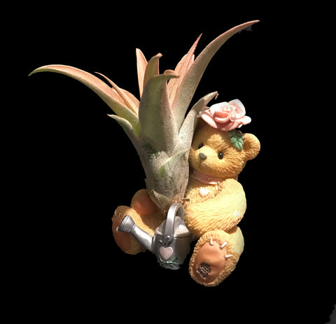 Tilla Critters Rosie One of a Kind Airplant Creations by Chili Fiesta Handiworks