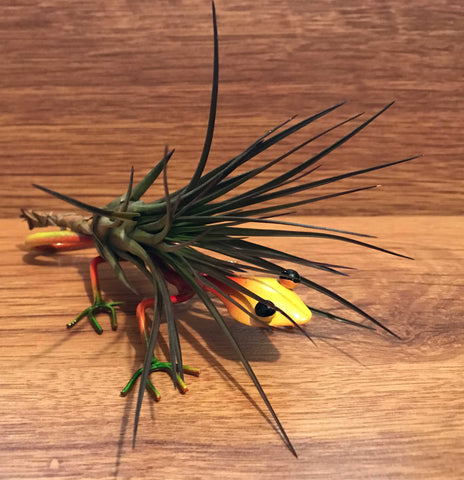 Tilla Critters Sally Mander One of a Kind Airplant Creations by Chili Fiesta Handiworks