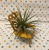 Tilla Critters Sitting Pretty One of a Kind Airplant Creations by Chili Fiesta Handiworks