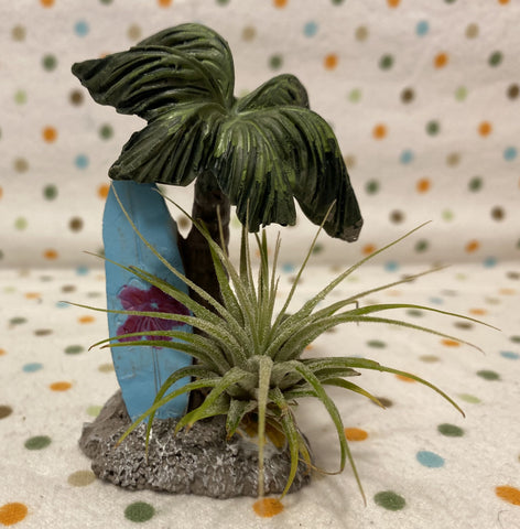Tilla Critters Surfs Up One of a Kind Airplant Creations by Chili Fiesta Handiworks